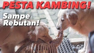 MUKBANG KAMBING GULING! SNOWA SIAGA TEMPUR! | THE GOLDEN FAMILY