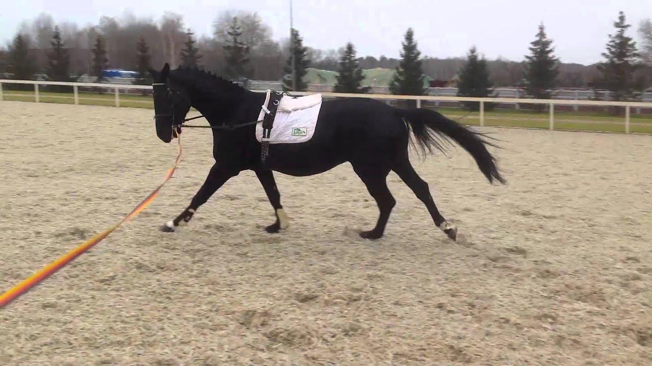 Лошадь фризской породы. Купание лошади фриз - YouTube