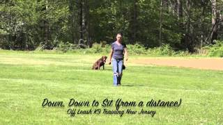 Lab Off Leash Nj Dog Training Amazing Transformation