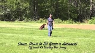 Lab Off Leash Nj Dog Training Amazing Transformation