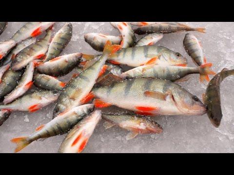 как ловить краснопёрку на зимней рыбалке