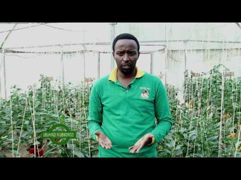 UBUHINZI N'UBWOROZI GREEN HOUSE FARMING PART 1