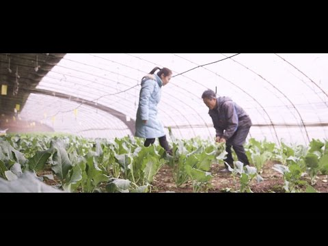 Taobao Originals: Rainbow Rain Organic Farm