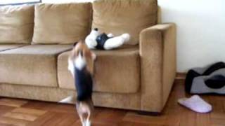 Ursula Jumping For Snoopy -- Funny Cute Beagle