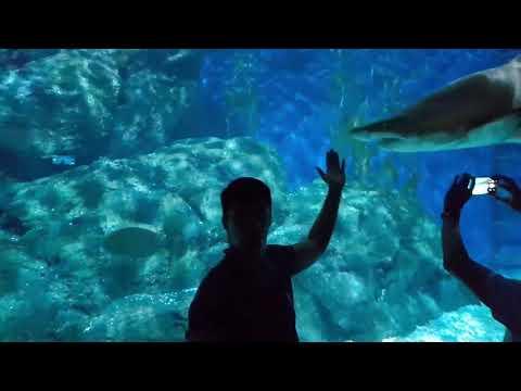 Siam Ocean World BKK Sea Life BANGKOK THAILAND 2017