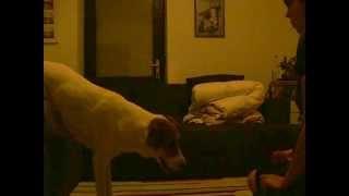Rona - lift hind legs