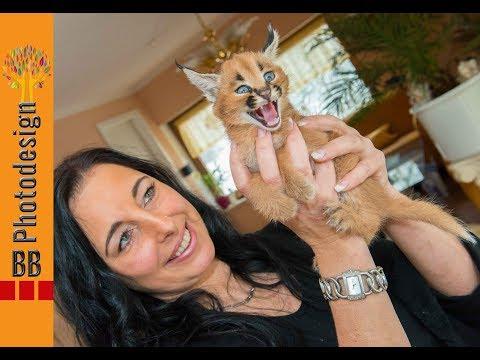 Karakal - Raubkatzen - Baby   CATI