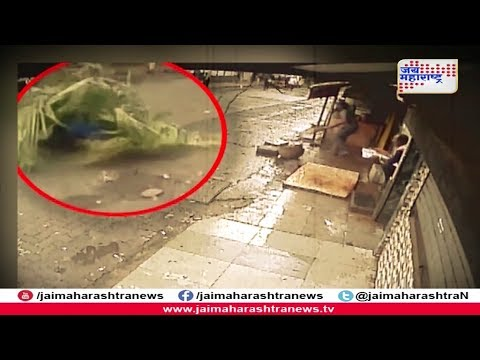 कोसळतोय मृत्यू | Mumbai woman dies after coconut tree falls on her