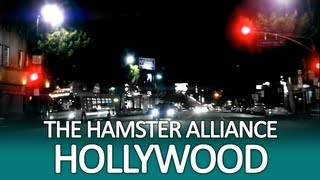 Hollywood (Hamster Alliance)