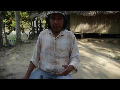 "Maestro Santiago prepares the potent Amazonian remedy ""mocura"""