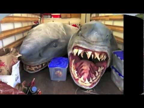 Historic And First Two-Headed Mutant Shark Discovered on Florida سمكه قرش براسين - YouTube