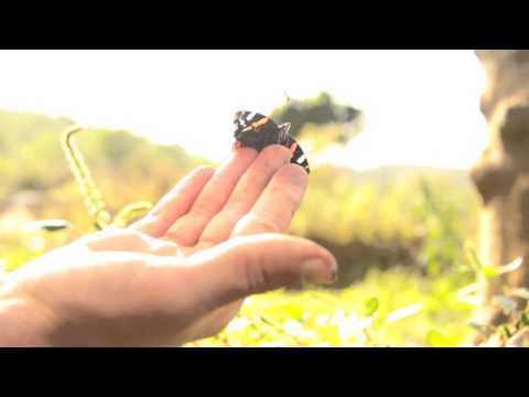 Yoav Ilan - Pulse of a Butterfly