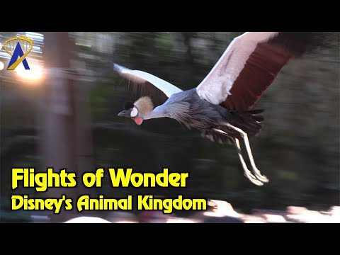 Flights of Wonder - Full Show at Disney's Animal Kingdom
