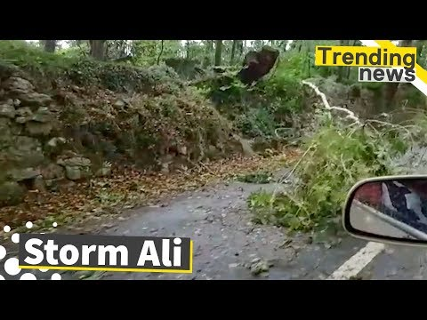 Storm Ali Hits UK and Ireland | Fallen Trees and Travel Disruption