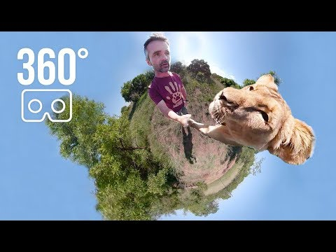 Hanging with Meg in 360° | The Lion Whisperer