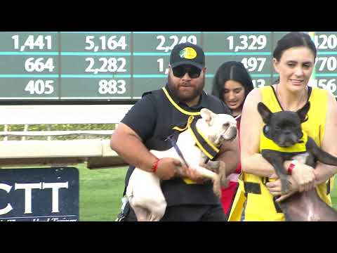 2020 French Bulldog Derby Championships at Santa Anita Park