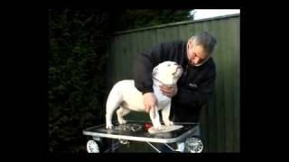 English Bulldog Breed Standard (uk)