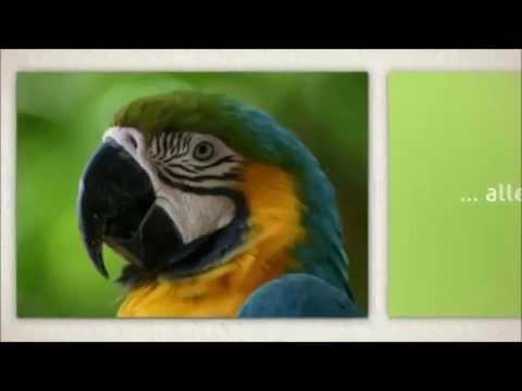 Papageienkäfig Villa Andrea