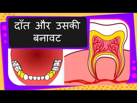 Science Human Teeth Types And Structure Part 1 Hindi Youtube