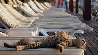 Анапские серые коты Дубль 1