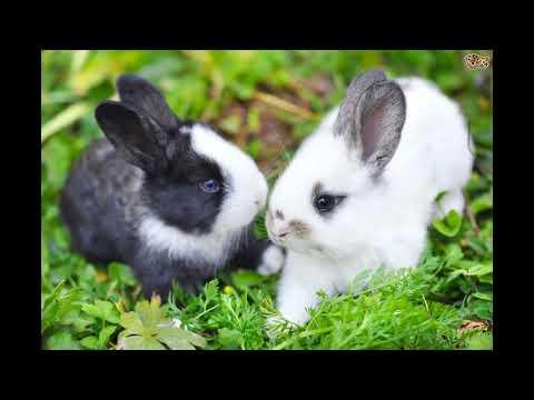 Вопрос: Крольчиха разбрасывает и убивает крольчат ,что делать?