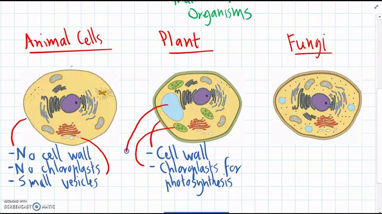 Level 9 - 1 Animal, Plant & Fungus cells - YouTube