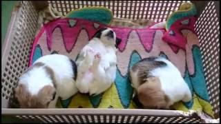 子犬が生まれていますよ http://www.woof.jp/jrt.html 2015年9月20日に...