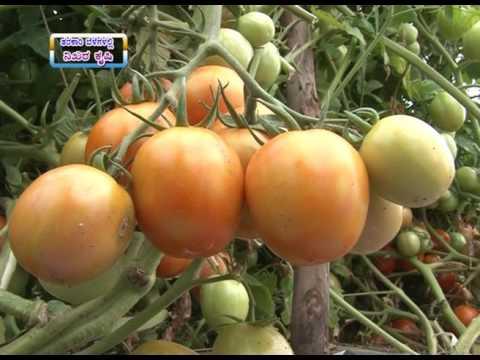 10 11 2016 precision farming vegetables dr m prabhakar 1
