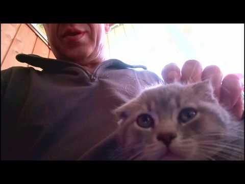 Адаптация кошки: Как уменьшить стресс от переезда в новый
