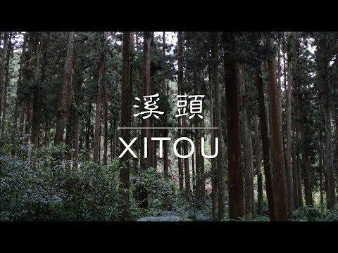 100-sec Trip – Xitou, Taiwan (溪頭)