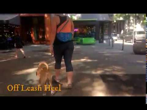 Overexcited, jumping dog learns to control himself! Off Leash K9 Training TN, NC, AL