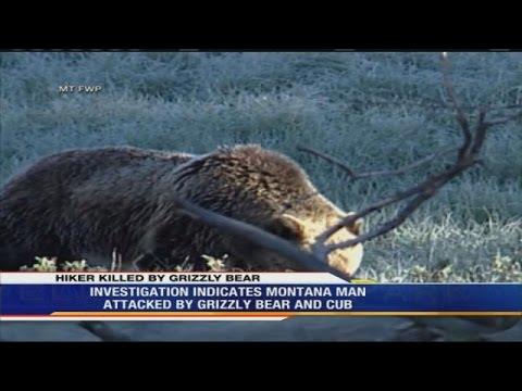 Billings man identified as Yellowstone bear victim