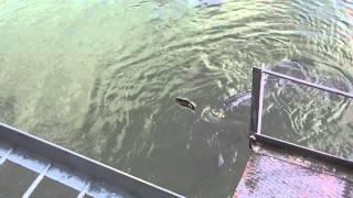 34 Czernobyl rybki