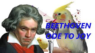 Beethoven ode to joy Cockatiel and parrot whistle sound singing training 1 hours
