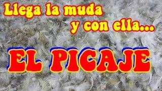 SALUD - COMO TRATAR EL PICAJE