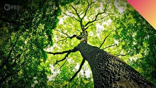 Do Trees Talk?