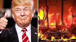 Make America Rake Again? Trump Claims Raking Will Prevent Forest Fires