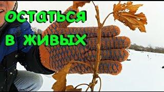 Украинская смородина, голубика, ежевика после русской зимы.
