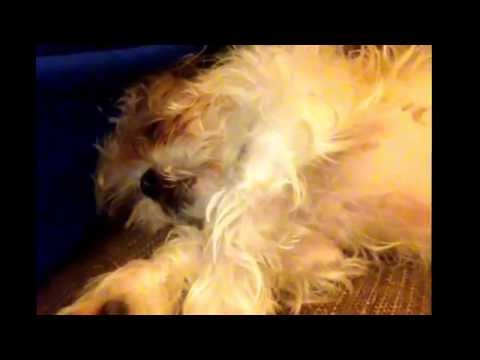 Lily Pup fast asleep snoring :) See https://www.google.co.uk/#q=Facebook+Lily+pup+%26+Albertstein