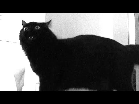 "Talking Cat says ""Hello?"""