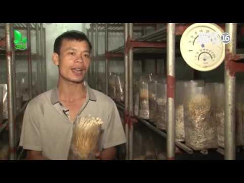 Mô hình trồng nấm trong nhà lạnh