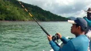 การลากปลาหมึก 2