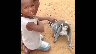 Funniest Cats,birds and Dogs-Funniest and happiest Animals life 2019  NEW