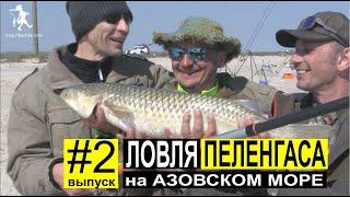 Ловля Пеленгаса с берега весной 2019. Азовское море. Выпуск #2