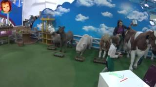 ВЛОГ Киев гладим животных играем на детской площадке магазин игрушек Kidswill shopping