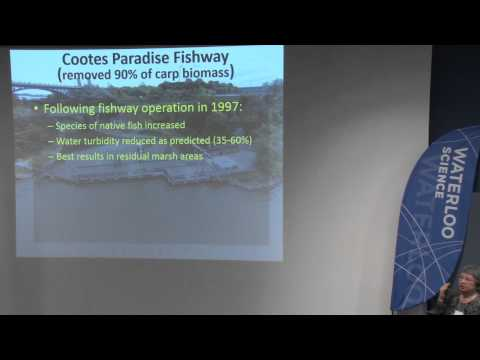 Pat Chow-Fraser: Ecological indicators of ecosystem health for coastal wetlands