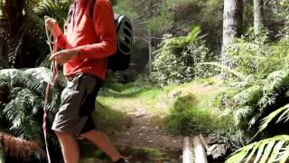 Abyssinian Cat that loves walking adventures