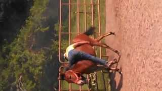 New way to break a Mule to ride