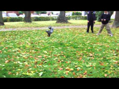 1/10 Electric Off-Road R/C Buggy Stock Model by Exceed RC from YouTube · Duration:  6 minutes 50 seconds  · 372,000+ views · uploaded on 3/6/2009 · uploaded by nitrorcx