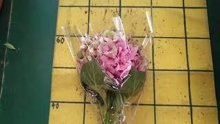 [인터넷꽃도매시장] 엔틱수국 꽃도매 부산꽃도매 꽃스타그…